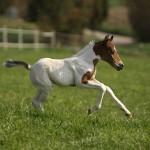 Paint Horse